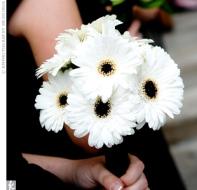 Classic-White-Gerbera-Daisy-Bridesmaids-Bouquet